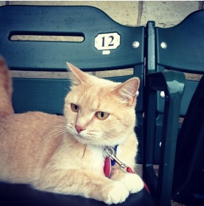 Hogan, lounging in a Miller Park seat. All he needs is some Brewers gear!