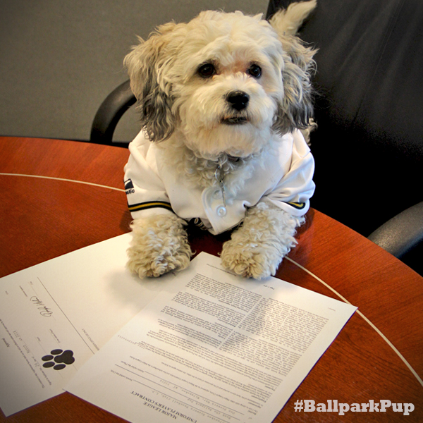 """Hank Officially Signs #Brewers Contract; Milwaukee to be his """"Fur ..."""