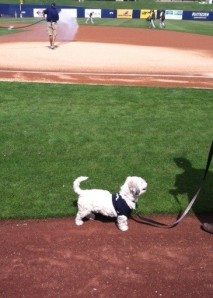 Hank takes a stroll around the warning track.