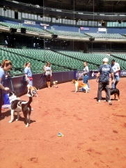All of the dogs at today's photo shoot were dogs that are up for adoption at the Wisconsin Humane Society.