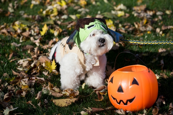 "Happy ""Howl""oween from Hankenstein and your Milwaukee Brewers"