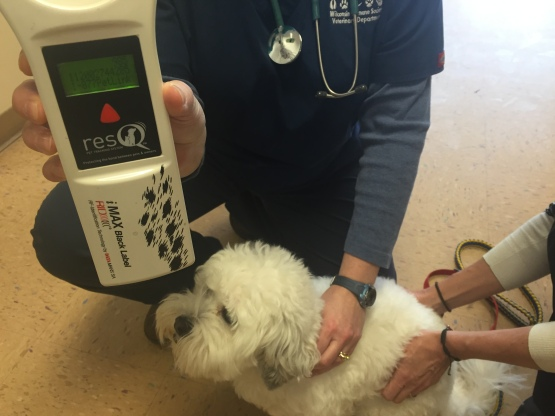 Hank was microchipped and a simple scan of a chip can reveal an animal's identification. This technology helps to reunite lost animals with their families.